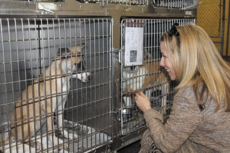 Karen Hirsch, LifeLine communications director, visits with one of the dogs at the Fulton County facility on Feb.18.