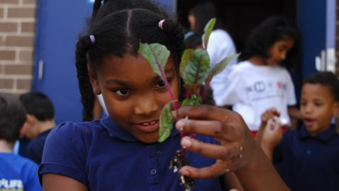Farm-to-cafeteria: Schools provide fresh local produce for school lunches